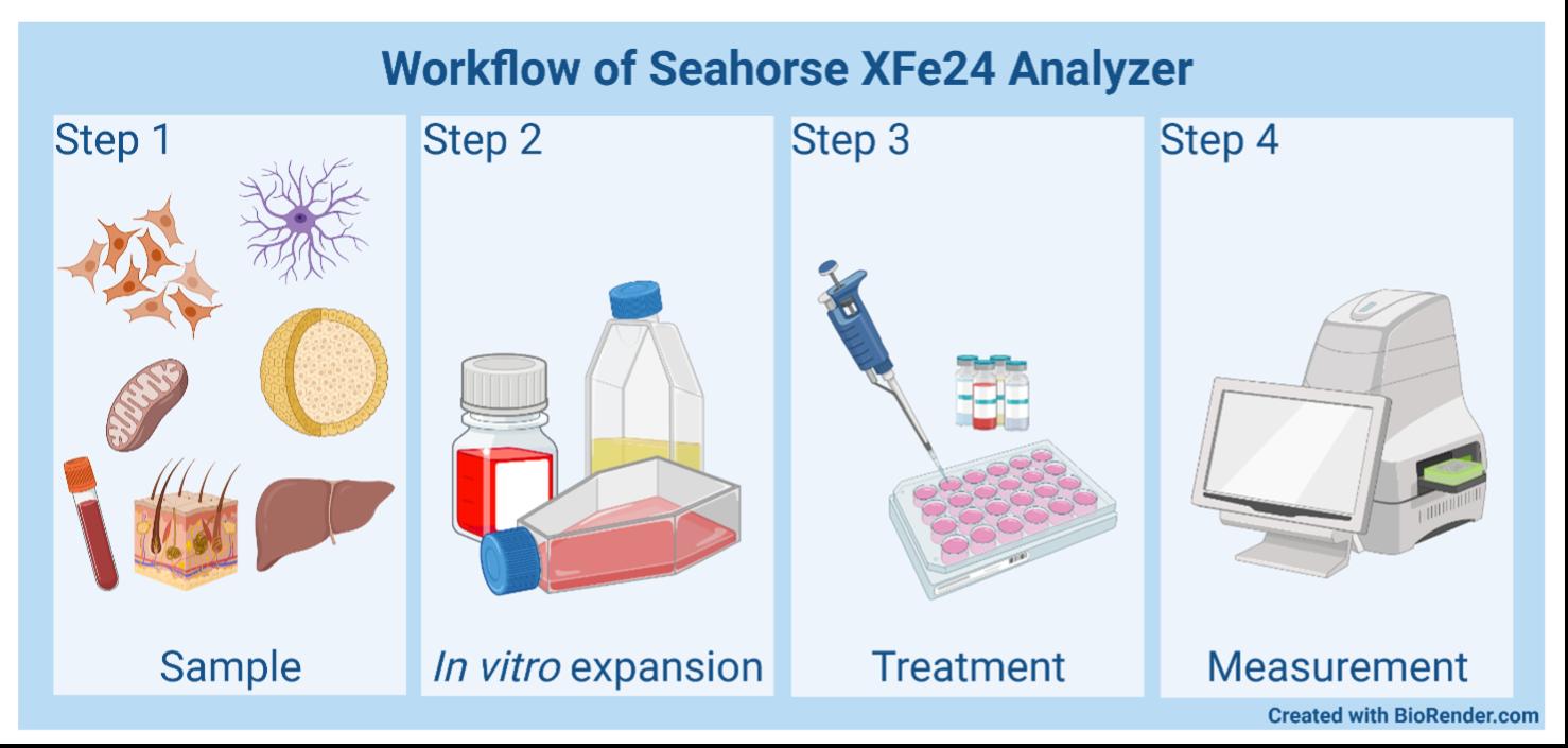 Workflow of Seahorse XFe24 Analyzer